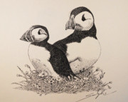 Puffin Drawings Posters - You And Me Poster by Saundra Smoker
