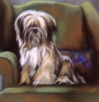 Dogs Pastels Framed Prints - You Are In My Spot Again Framed Print by Barbara Keith