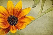 Textured Floral Prints - You Are My Sunshine Print by Lois Bryan