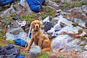 Golden Settings Pet Photography Photos - You Did Pack My Food--Right by Kara Kincade