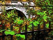 Grapevines Digital Art Framed Prints - You Go First Framed Print by RC DeWinter