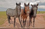 Horse Greeting Cards Framed Prints - You Guys Just Dont Get It Framed Print by James Steele