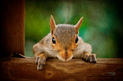 Squirrel Digital Art Metal Prints - You Rang Metal Print by Lois Bryan