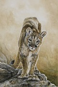 Mountain Lion Paintings - Young Blood by Nonie Wideman