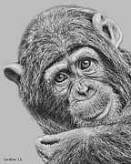Chimpanzee Digital Art Prints - Young Chimp 5 Print by Larry Linton
