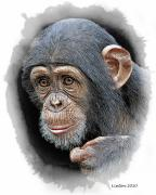 Chimpanzee Digital Art Framed Prints - Young Chimp Framed Print by Larry Linton