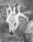 Donkey Drawings Framed Prints - Young Donkey Framed Print by Janae Lehto
