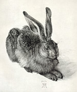 Nature Study Photo Prints - Young Hare, By Durer Print by Sheila Terry