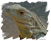 Costa Digital Art Prints - Young Iguana Print by Larry Linton