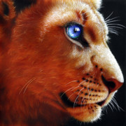 African Paintings - Young Lion by Jurek Zamoyski