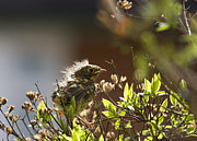 Tiny Photos - Young robin by Jane Rix