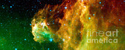 Super Stars Photo Posters - Young Stars Emerge From Orions Head Poster by Nasa
