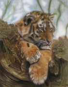 Tiger Pastels - Young Tiger by Sabine Lackner