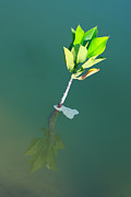 Rural Living Originals - Young Tree Growing In Water by Nutthawit Wiangya