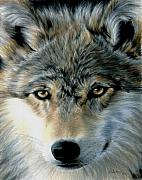Animal Drawings Prints - Young Wolf Print by Carla Kurt