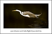 Great Heron Photos - Your Dreams Wont Take Flight If You Dont Try by  Onyonet  Photo Studios