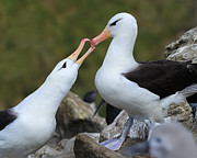 Sea Bird Photos - Youre The One by Tony Beck