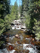 Rocky Mountain National Park Posters Prints - Ypsilon Trail River Print by Debbie Poetsch