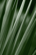 Jeannie Burleson Art - Yucca Spikes by Jeannie Burleson