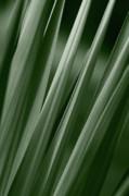 Jeannie Burleson - Yucca Spikes