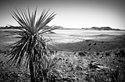 Jason Smith Prints - Yucca With A View Print by Jason Smith