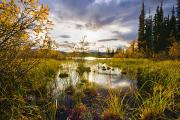 Yukon River Prints - Yukon River And Fall Colours At Sunset Print by Yves Marcoux