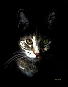 Housecats Framed Prints - Zack in Shadows Framed Print by Dale   Ford
