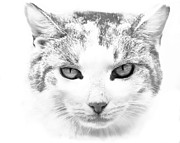Cat Picture Posters - Zahra Poster by Steven Richardson