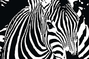 Animals Mixed Media Posters - zebra-01A Poster by Eakaluk Pataratrivijit