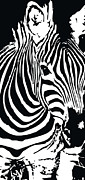 Black And White Digital Art Posters - zebra-01C Poster by Eakaluk Pataratrivijit