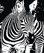 Black And White Digital Art Posters - zebra-01D Poster by Eakaluk Pataratrivijit