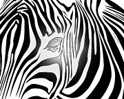 Jungle Animals Posters - Zebra 2 Poster by Cheryl Young