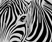Black And White Mountain Prints Framed Prints - Zebra 3 Framed Print by Cheryl Young