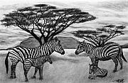 African Thorn Tree Drawings Originals - Zebra African Outback  by Peter Piatt