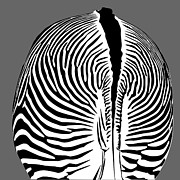Dave Digital Art Framed Prints - Zebra Butt Framed Print by Dave Gordon