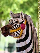 Lincoln City Framed Prints - Zebra Carousel Framed Print by Karen M Scovill