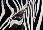 Wildlife Painting Metal Prints - Zebra Eye Metal Print by Ilse Kleyn