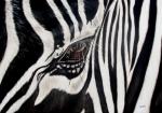 Ilse Kleyn - Zebra Eye