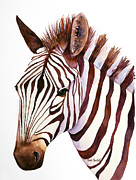 Zebra Paintings - Zebra Face by Renee Chastant