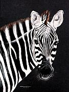 Blank And White Framed Prints - Zebra facing right Framed Print by DiDi Higginbotham