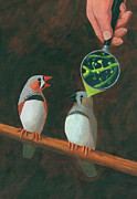 Scientific Prints - Zebra Finch Print by John Holdway