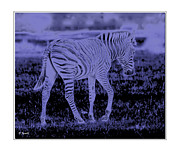 Cud Posters - Zebra in Moonlight Poster by Diana  Tyson