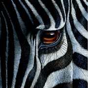 Wildlife Painting Prints - Zebra Print by Jurek Zamoyski