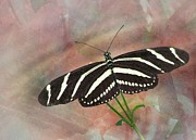 Spiritual Strength Prints - Zebra Longwing  Print by Rudy Umans
