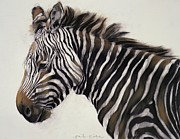 Zebra Metal Prints - Zebra  Metal Print by Odile Kidd