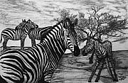 African Thorn Tree Drawings Originals - Zebra Outback  by Peter Piatt