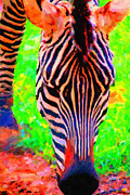 Wingsdomain Digital Art Metal Prints - Zebra . Photoart Metal Print by Wingsdomain Art and Photography