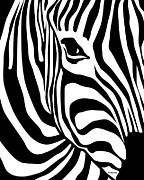 White Digital Art Prints - Zebra Print by Ron Magnes