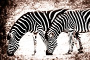 Captive Originals - Zebra s by FloorOne Photography