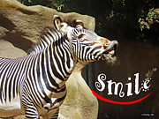 Zebra Smile Print by Methune Hively